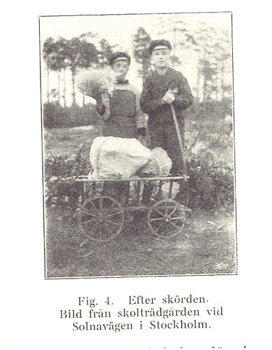 """Skolträdgård vid Solnavägen i Stockholm """"Efter skörden"""""""